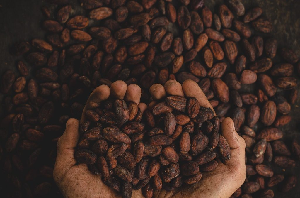 The Faces of Cacao